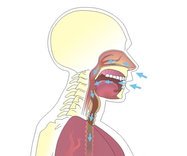 Vocalización y articulación